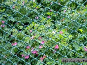 Пластиковая сетка дача