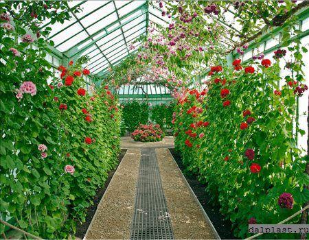 Зимний сад из поликарбоната